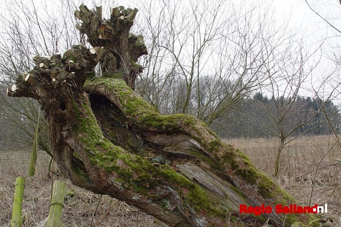Afsluiting knotseizoen door IVN Raalte op 5 april - Foto: Eigen foto