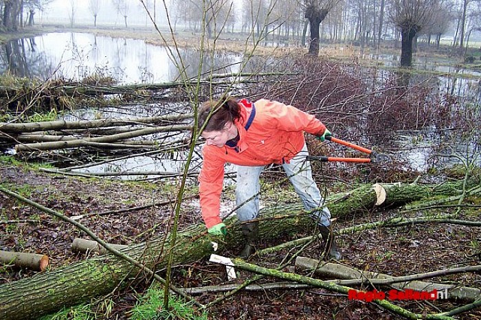 Lionsclub opnieuw aan het wilgen knotten in Luttenberg - Foto: RTV-Raalte