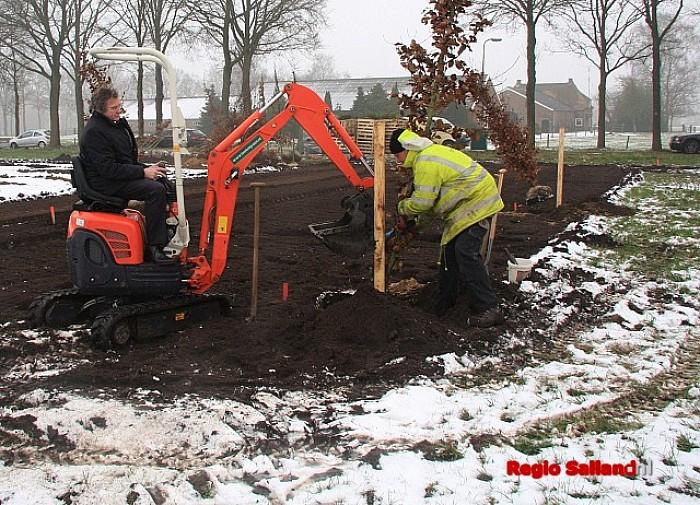Nieuwe bomen aan de Franciscushof in Raalte - Foto: Eigen foto