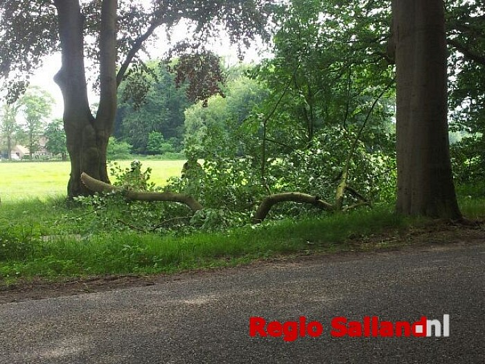 Tak op fietspad aan de Boxbergerweg in Wesepe - Foto: Wesley van de Kraats