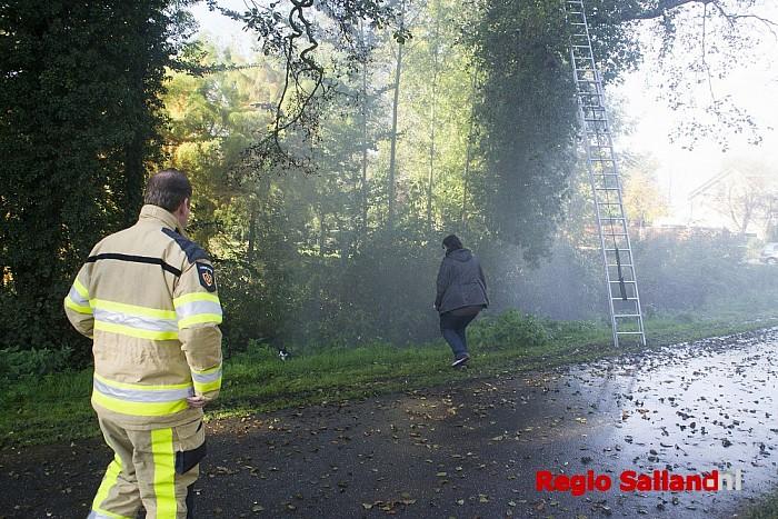Brandweer spuit kat uit boom aan de Wijhezicht in WIjhe - Foto: Jasper Hutten