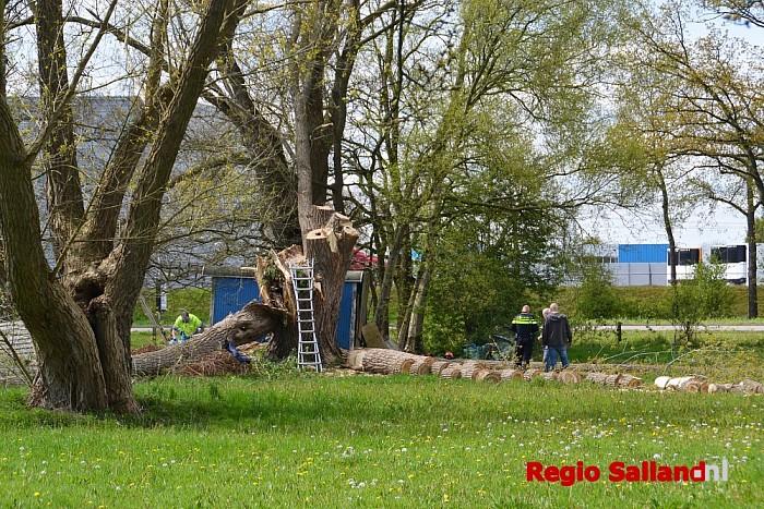 Man valt uit boom tijdens snoeiwerkzaamheden in Zwolle - Foto: Jasper Hutten