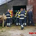 Koe in de mestkelder aan de Rietbergerweg in Wijhe