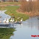 Grootste deel West-Overijssel kent geen wateroverlast