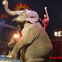 Circus Renz Berlin komt naar Raalte