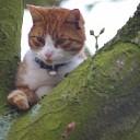 Brandweer haalt kat uit de boom in Boerhaar