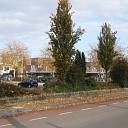 Bomen Domineeskamp verplant vanwege waterberging