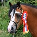 Regionale keuring Nederlands Welsh Pony in Hellendoorn