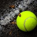 Promotie voor sportverenigingen tijdens sportdagen Olst