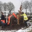 Nieuwe bomen aan de Franciscushof in Raalte