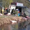 Varkens te water na ongeval in Hellendoorn