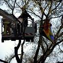 Vlieger in de boom langs de N348 te Raalte
