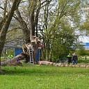 Man valt uit boom tijdens snoeiwerkzaamheden in Zwolle