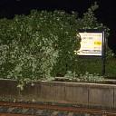 Boom omgevallen op perron station Dalfsen